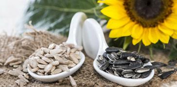 proprietà dei semi di girasole