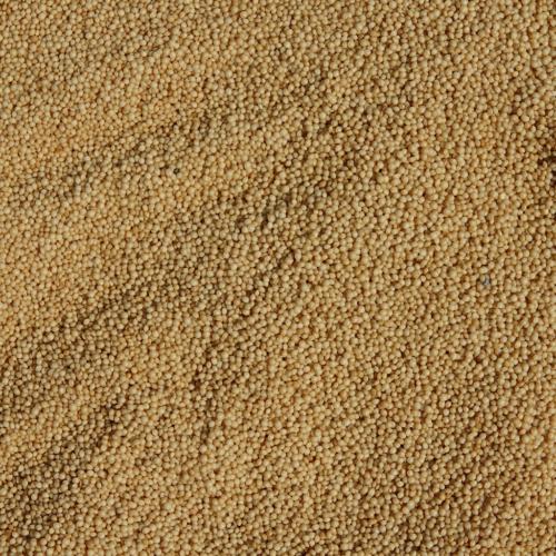 Semi di amaranto