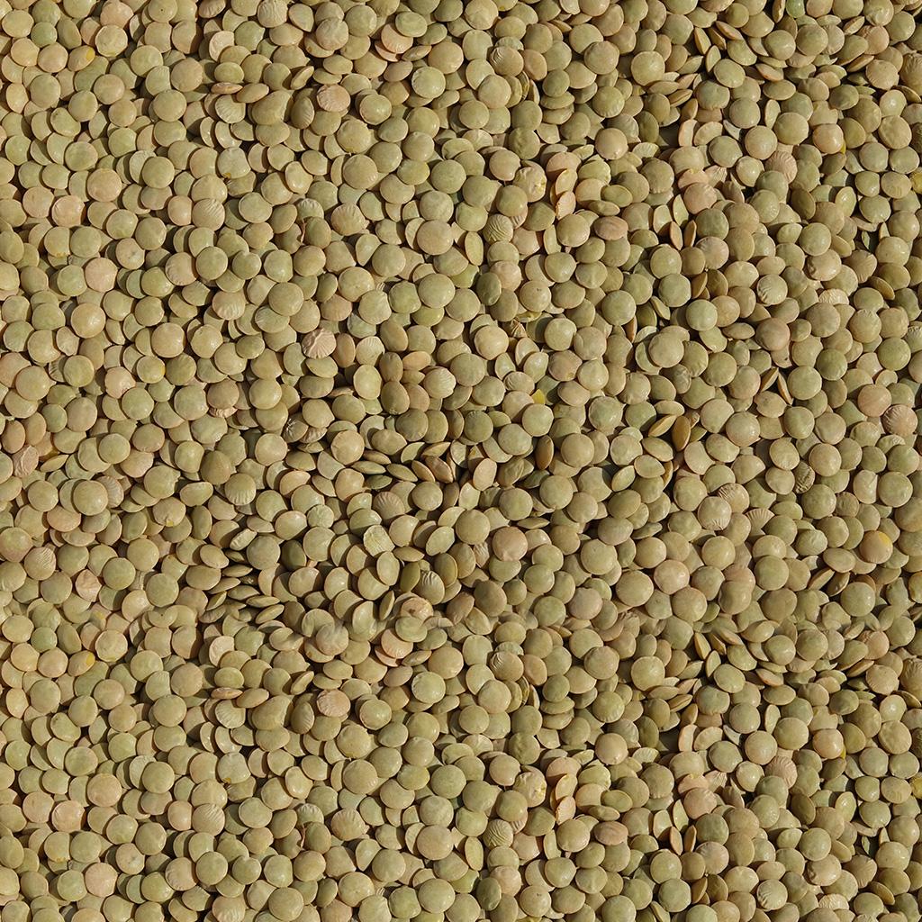 Lenticchie verdi calibro piccolo