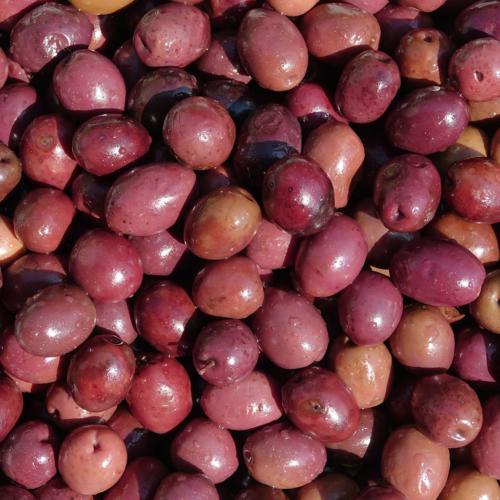 Olive greche nere
